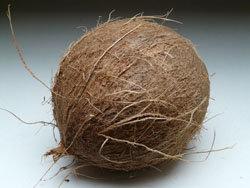 kokosovyj-orex