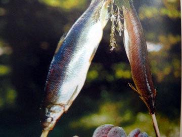 Ветки с рыбами воткнуть
