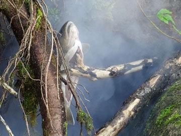 Запекать рыбки на углях постепенно