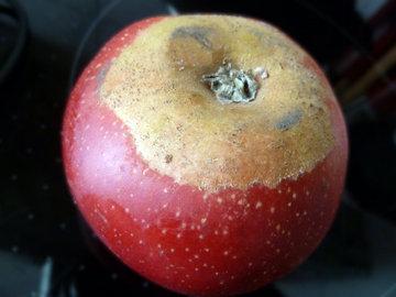 яблоки с Бодензее