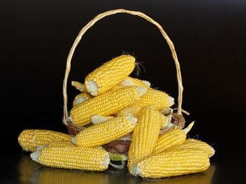 Вот такая она кукуруза