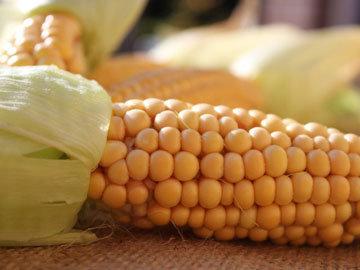 Калории в кукурузе