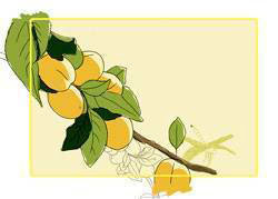 Этикетки для банок абрикосы