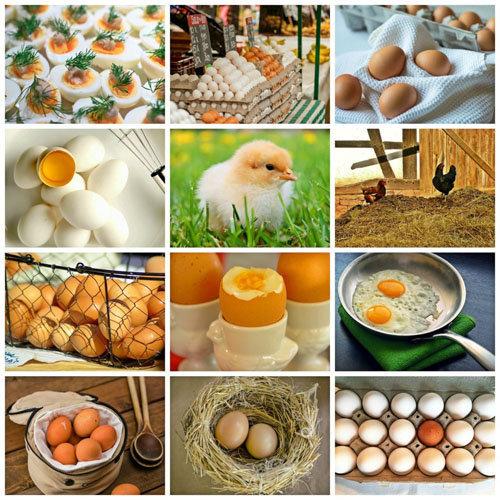 Яйца полны питательных веществ и очень полезны для здоровья