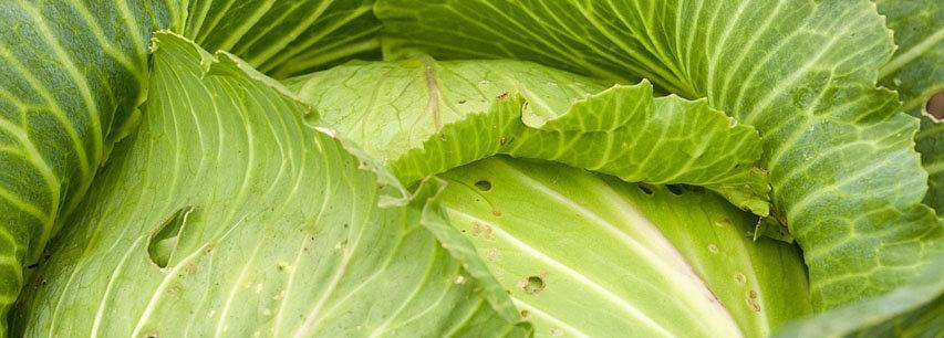 Slider Что приготовить из капусты