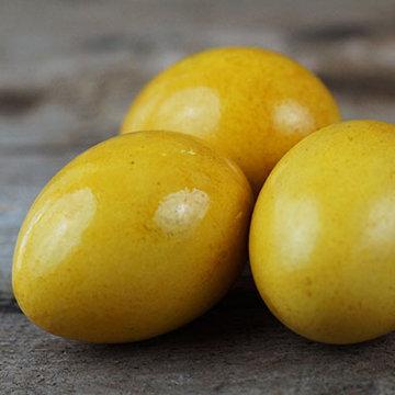 Куркума золотисто-желтый 3