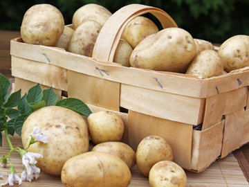 Польза картофеля - пять интересных фактов