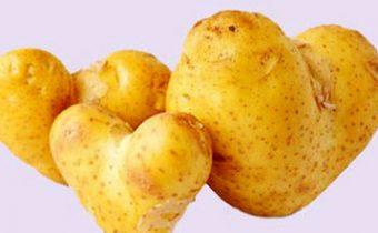 Польза картофеля. Противопоказания