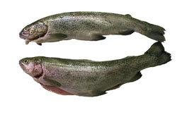Рецепты на 23 февраля: копчение рыбы