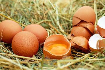 Что в яйце