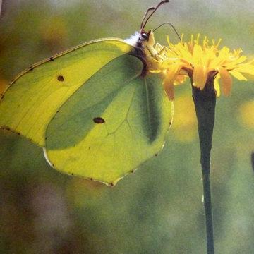 Бабочки летают