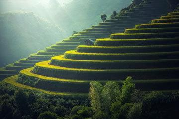 рис играет огромную роль в азиатском регионе