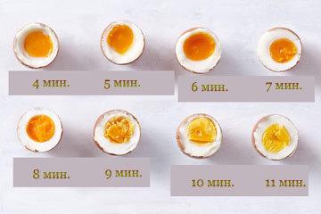 руководство для варки куриных яиц