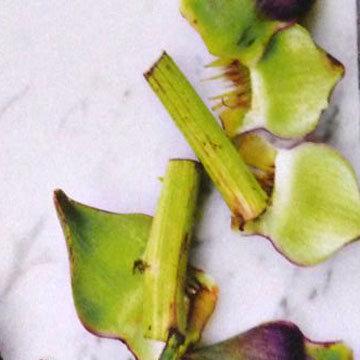 Суп из листьев артишока 1
