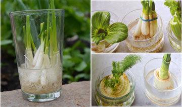 обрезки китайской капусты, пак чоя, зеленого лука