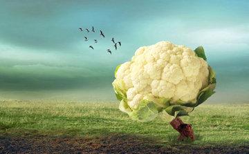 Цветная капуста. Пищевая ценность