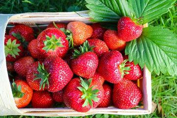 Используйте ягоды свежие